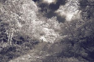 Martyn Grimmer-Narnia
