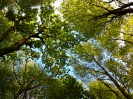 Rabley woodland