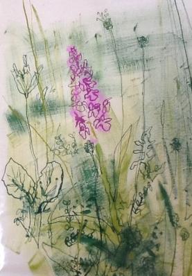 Nik Pollard Orchid Drawing