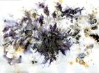 Vanetta Joffe -'Forest Floor'
