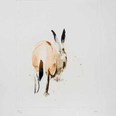 Nik Pollard 'Brown Hare' 2018, Intaglio print, Edition of 30